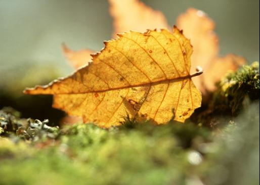温州秋季皮肤干燥对白癜风有影响吗?